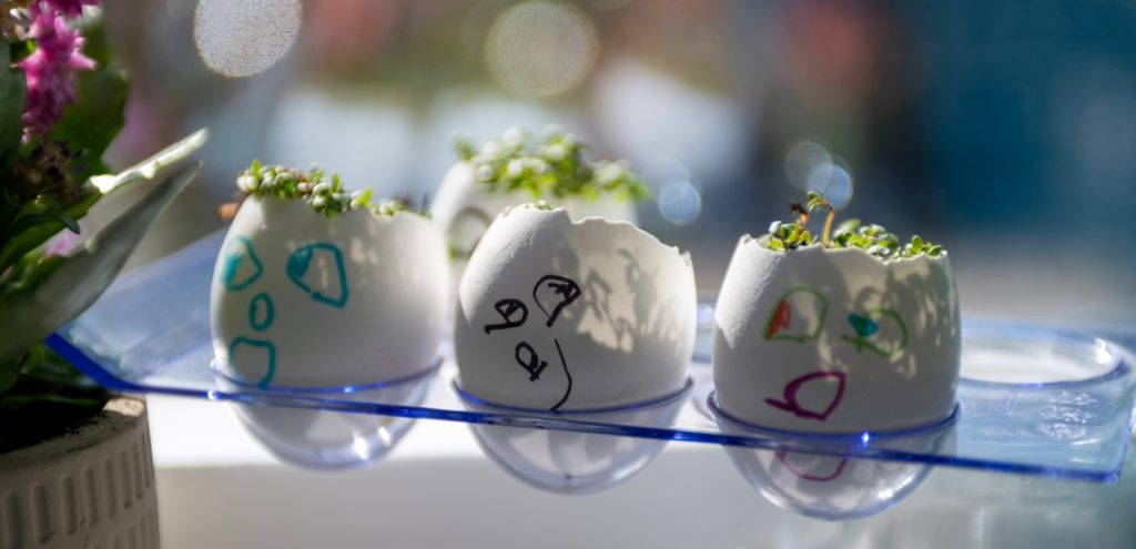 Three eggs with drawn on faces with cress gowning out of the top.